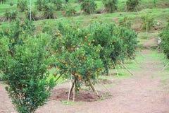 Orange farm Royalty Free Stock Images