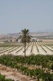 Orange farming southern Spain Stock Photo