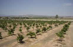 Orange farming southern Spain Stock Images