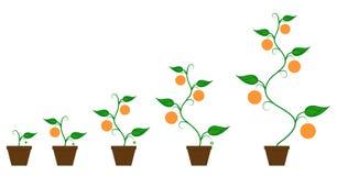 Orange fas för fruktväxttillväxt stock illustrationer