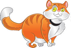 Orange fat cat Stock Image