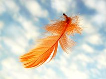 Orange feather. On sky background Royalty Free Stock Photos