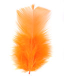 Orange feather Stock Image