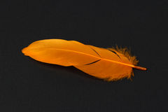 Orange feather on black paper background Stock Photos