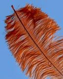 Orange feather. On blue background Royalty Free Stock Photo