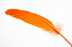 Orange feather close up Stock Photo