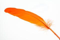 Orange feather close up Stock Photo