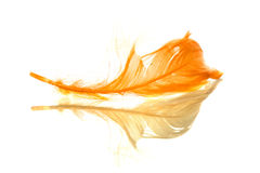 Orange feather reflected Stock Images