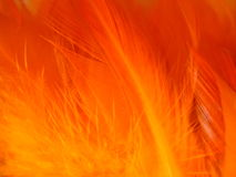 Orange feathers texture. сlose up Stock Photos