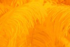 Orange Feder des Vogels für Hintergrund Stockfotos