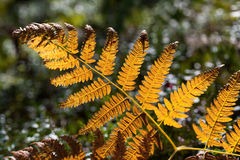Orange fern leaf Stock Image