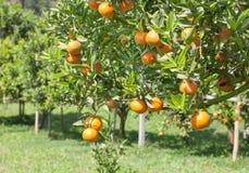 Orange field Royalty Free Stock Image