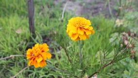 Orange figée de Flowertina clips vidéos
