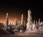 Orange Finnish winter forest Stock Photo