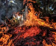 Orange Fire royalty free stock images