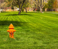 Orange Fire Hydrant In Grass. Orange Fire Hydrant In Middle Of Grass Area Royalty Free Stock Photo