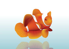 Orange Fische Stockbild