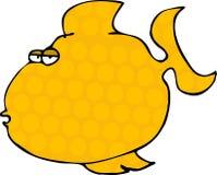 Orange Fische Stockfoto
