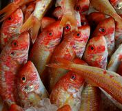 Orange Fische Stockfotografie