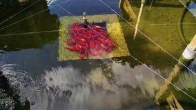 Orange Fische ver?rgert herein, Frankreich lizenzfreies stockfoto