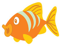 Orange fish Royalty Free Stock Photography