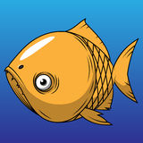 Orange fish. Orange toothed fish on a blue background Stock Image