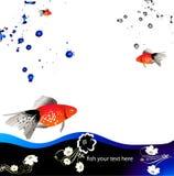 Orange fish. Water background with orange fish Royalty Free Stock Image