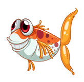 An orange fish with big eyes. Illustration of an orange fish with big eyes  on a white background Stock Image