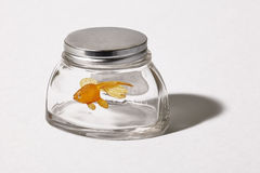 Orange fish in a fishbowl. Orange plastic fish in a fishbowl on a white background Stock Images