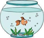 Orange fish in globe aquarium Royalty Free Stock Photo