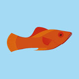 Orange Fish Isolated On Blue Background. Vector Orange Fish Isolated On Blue Background Stock Images