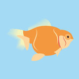 Orange Fish Isolated On Blue Background. Vector Orange Fish Isolated On Blue Background Royalty Free Stock Photography