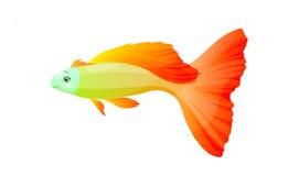 Orange fish,  isolated. Orange fish,  illustration  isolated Stock Image