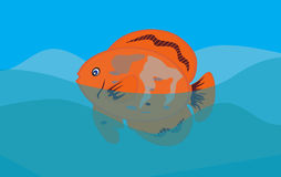 Orange Fish in Sea Background. Vector Royalty Free Stock Photo