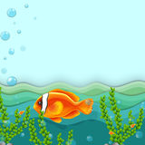 An orange fish under the sea Royalty Free Stock Photography