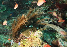 Orange fishes around seaweed Royalty Free Stock Images