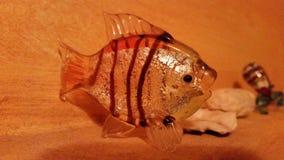 Orange fisk Royaltyfria Foton