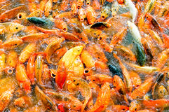 Orange fisk Arkivfoto
