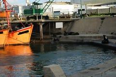 Orange fiskebåtar och sjölejon i Mar del Plata Royaltyfri Bild