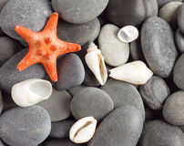Orange five-pointed starfish Royalty Free Stock Photography