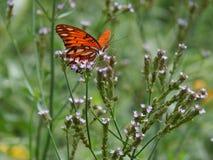 Orange fjäril Arkivbild