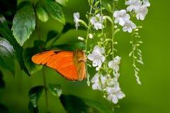 Orange fjäril Arkivfoto