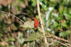 Orange fjäril mot grön backgound Arkivfoto