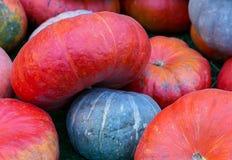 Orange flat pumpkin on a gray small farmer background autumn harvest symbol Royalty Free Stock Images