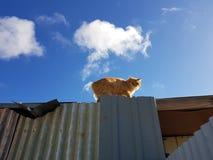 Orange flaumiges fettes Dach der faulen Katze Lizenzfreie Stockfotos