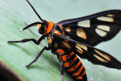 Orange Fliege lizenzfreie stockfotos