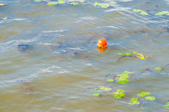 Orange floating buoy of spherical shape in the water Stock Images