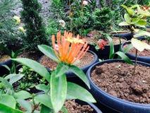 Orange Floower blühen im Tageslicht lizenzfreie stockbilder