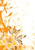 Orange floral Stock Images