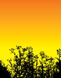 Orange floral background. Vector illustration of silhouetted grass and flowers on orange sky background Stock Photo